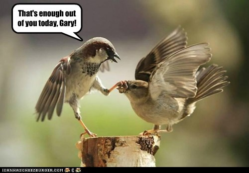 shut up,birds,grabbing,beaks