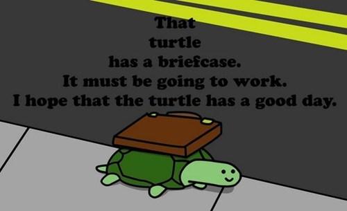 important,turtle,briefcase