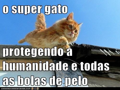 o super gato  protegendo a humanidade e todas as bolas de pelo