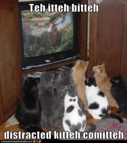 Teh itteh bitteh  distracted kitteh comitteh