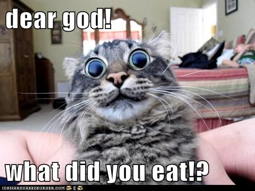 dear god!  what did you eat!?