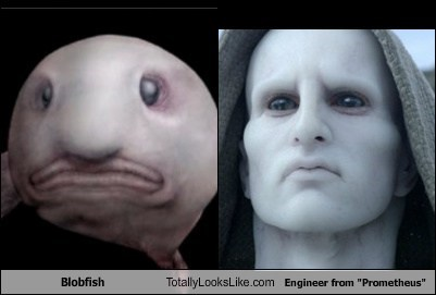 "Blobfish Totally Looks Like Engineer from ""Prometheus"""