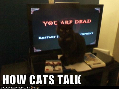 HOW CATS TALK