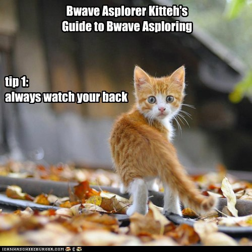 Bwave Asplorer Kitteh's  Guide to Bwave Asploring