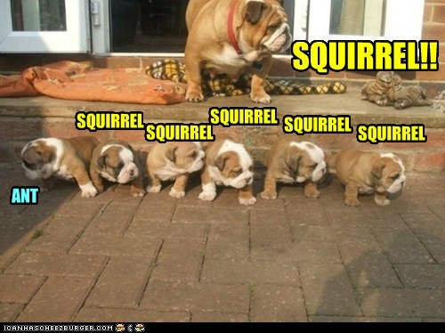 Different Drummer Doggie