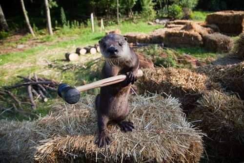 None Stand a Chance Against the Adorable Otter Uprising