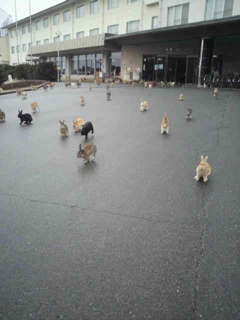 Bunday,bunnies,islands,Japan,squee,rabbits