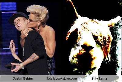 Justin Bebier Totally Looks Like Silly Lama