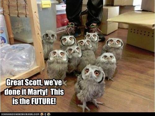 back to the future,owls,amazed,magic