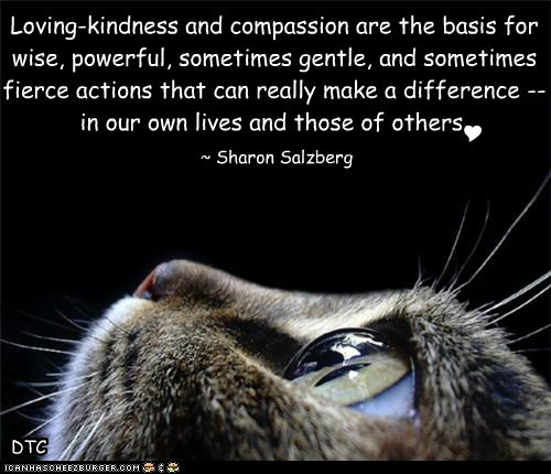 Loving-kindness and compassion are the basis for wise, powerful, sometimes gentle, and sometimes fierce actions that can really make a difference -- in our own lives and those of others.
