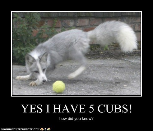 YES I HAVE 5 CUBS!