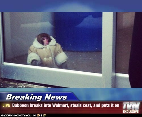 Breaking News - Babboon breaks into Walmart, steals coat, and puts it on