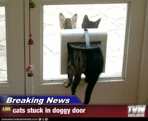 Breaking News - cats stuck in doggy door