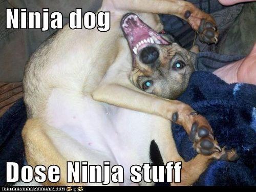 Ninja dog   Dose Ninja stuff
