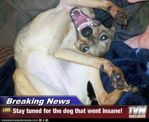 Breaking News - Stay tuned for the dog that went insane!