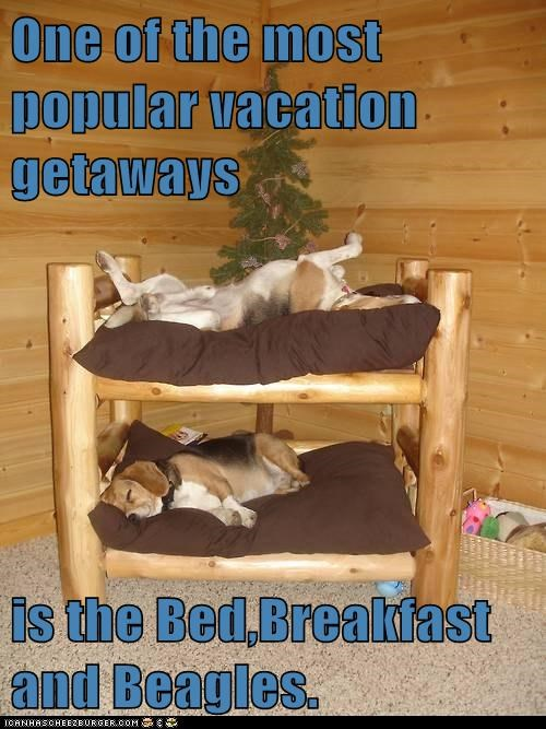 One of the most popular vacation getaways  is the Bed,Breakfast and Beagles.