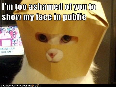 disguise,bag,shame,Cats