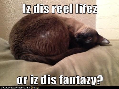 Iz dis reel lifez  or iz dis fantazy?