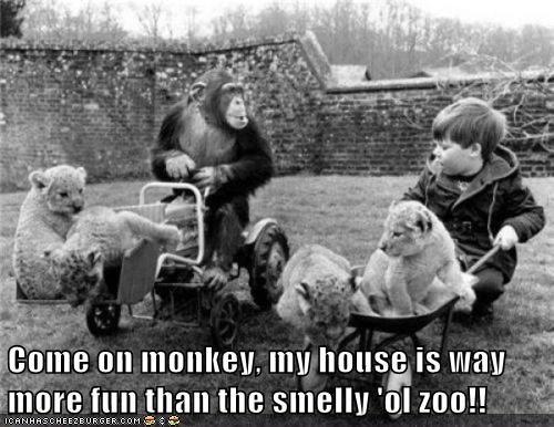 boy,zoo,chimp