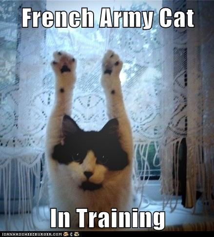 French Army Cat  In Training