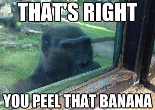 creepy,bananas,gorillas