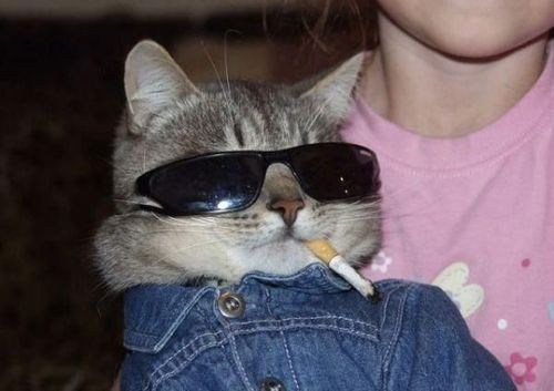 glasses,smoking,Cats