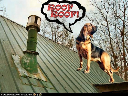 ROOF ROOF!