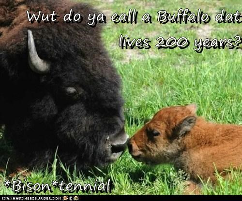 Wut do ya call a Buffalo dat lives 200 years?  *Bison*tennial