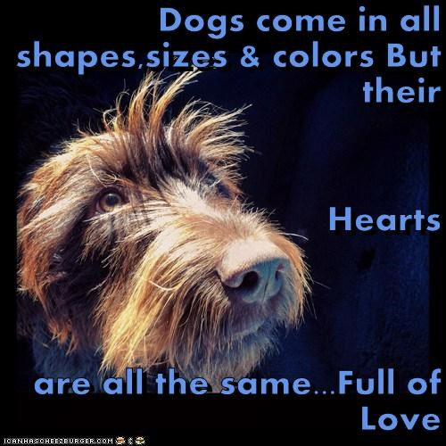Dogs come in all shapes,sizes & colors But their  Hearts  are all the same...Full of Love