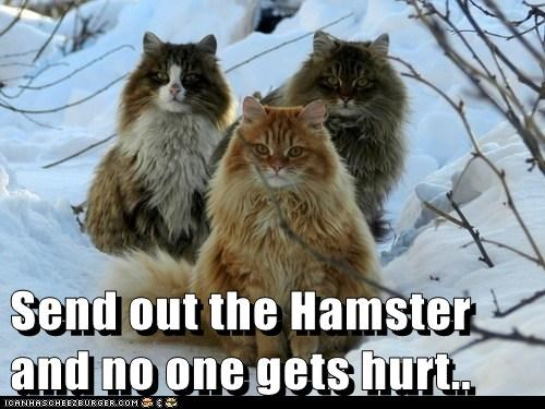 Send out the Hamster and no one gets hurt..