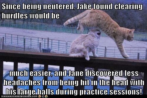 Since being neutered, Jake found clearing hurdles would be   much easier, and Jane discovered less headaches from being hit in the head with his large balls during practice sessions!