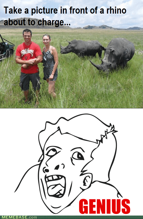 Because Rhinos don't kill people...