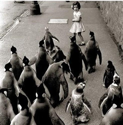 mobs,penguins,vintage