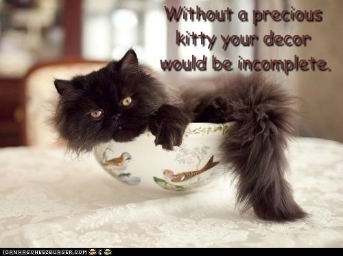 Without a precious  kitty your decor  would be incomplete.
