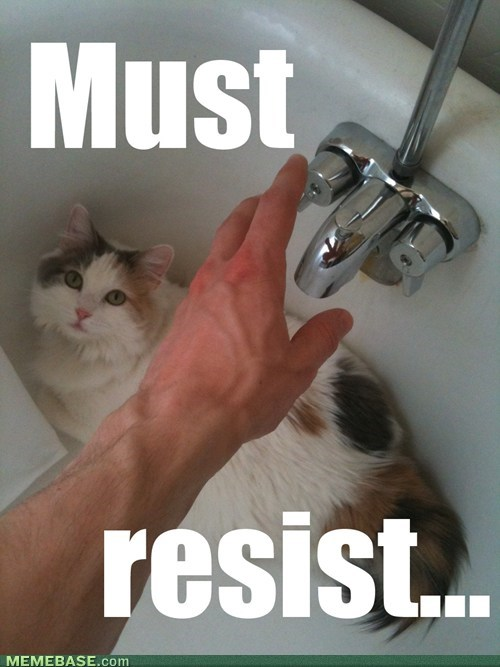 water,trolling,Cats