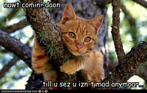 trees,naughty,mad,Cats