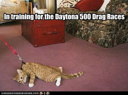 Drag Racing: Kitties HATE It!