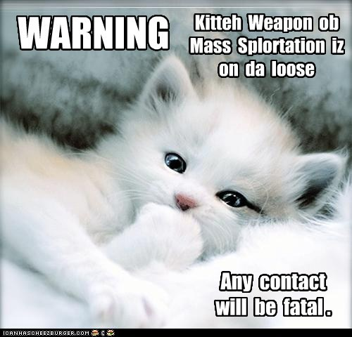 WARNING: This Kitten iz so Cute iz Deadly!
