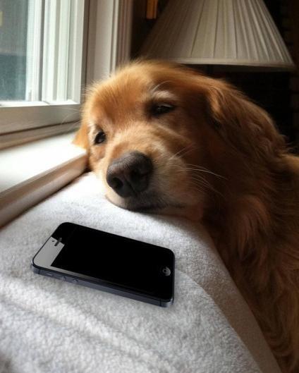 Nobody Texts Dog