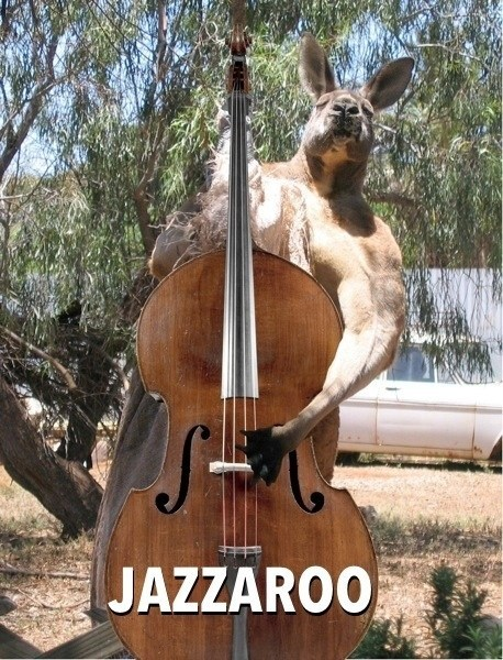 Why Do Baby Kangaroos Make Great Drummers?...