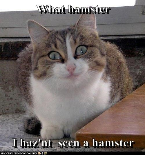 What hamster  I haz'nt  seen a hamster