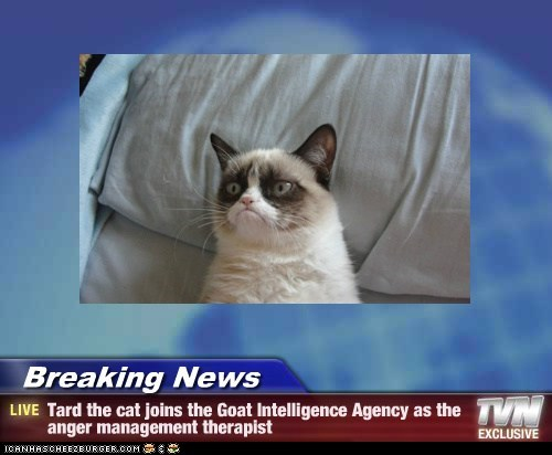 Breaking News - Tard the cat joins the Goat Intelligence Agency as the anger management therapist