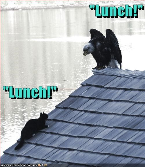 """""""Lunch!""""                                                              """"Lunch!"""""""