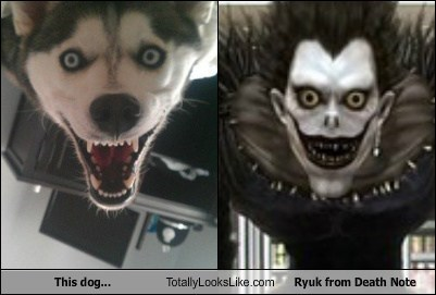 This Dog Totally Looks Like Ryuk from Death Note