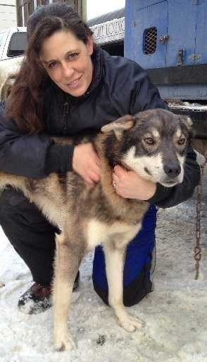 Meet Some of the Top Dogs of the Iditarod