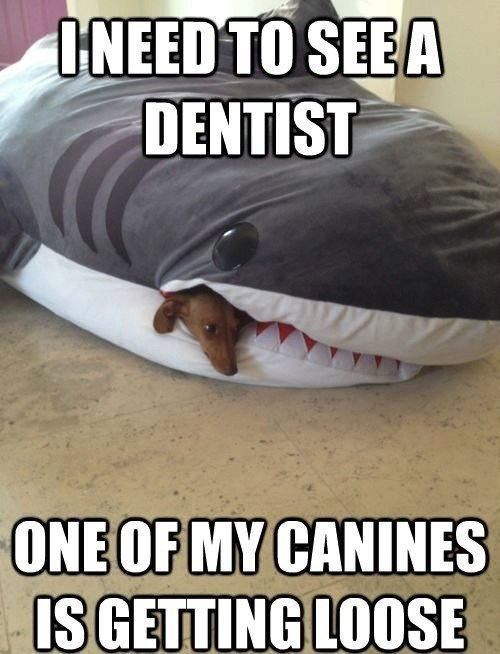 Pillow,loose,canines,dachsund,dentist,teeth,shark,double meaning,dogs