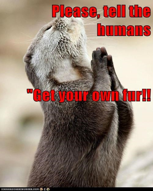 "Please, tell the humans ""Get your own fur!!"