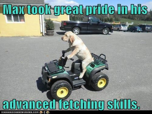 Max took great pride in his   advanced fetching skills.