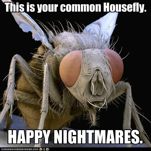 This is your common Housefly.