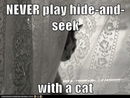 NEVER play hide-and-seek  with a cat